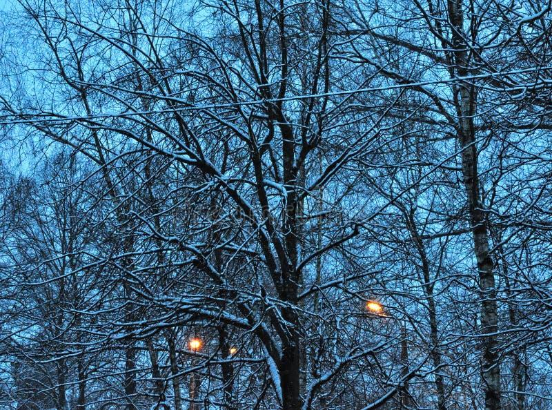 冬天微明 库存图片