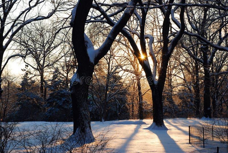 冬天日出在中央公园 免版税库存照片