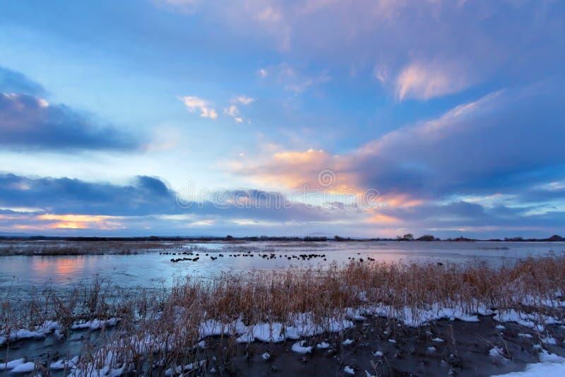 冬天日出,树丛台尔亚帕基National野生生物保护区 免版税库存照片