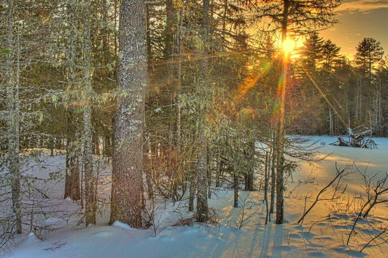 冬天日落在森林 免版税库存图片