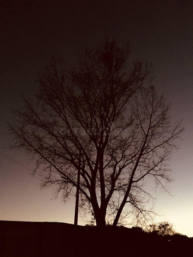 冬天日落离开阴影 库存照片