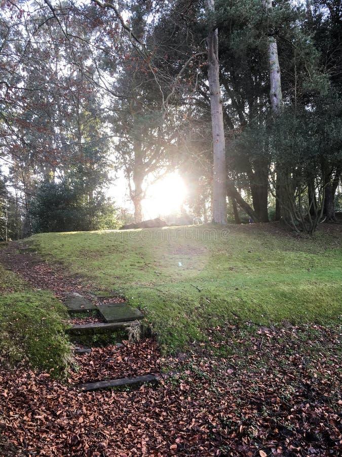 冬天日落通过森林 免版税库存照片