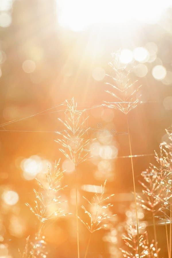冬天早晨、明亮的日出发光通过森林的在野花和蜘蛛网 被弄脏的美丽透明和bokeh 库存图片