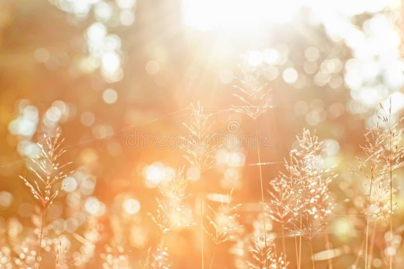 冬天早晨、明亮的日出发光通过森林的在野花和蜘蛛网 被弄脏的美丽透明和bokeh 免版税图库摄影