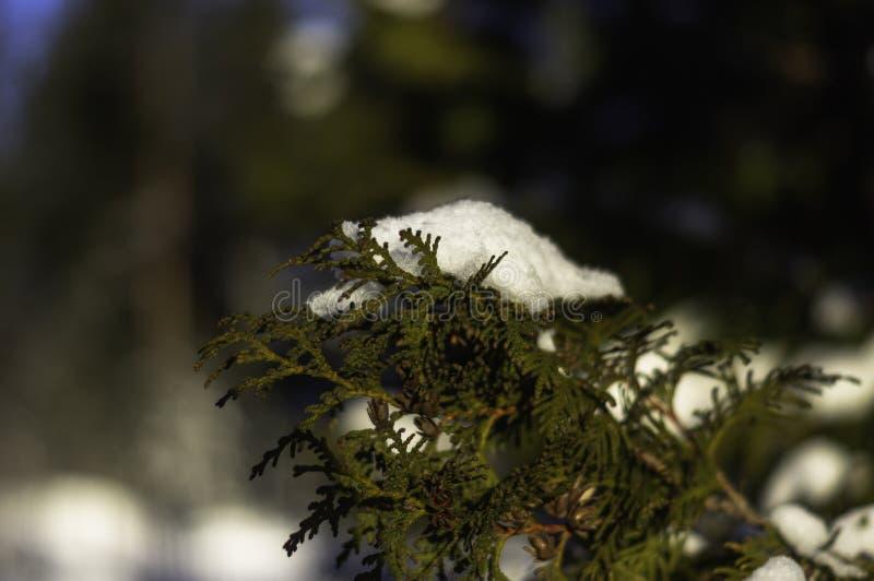 冬天早晨瑞典 免版税库存图片