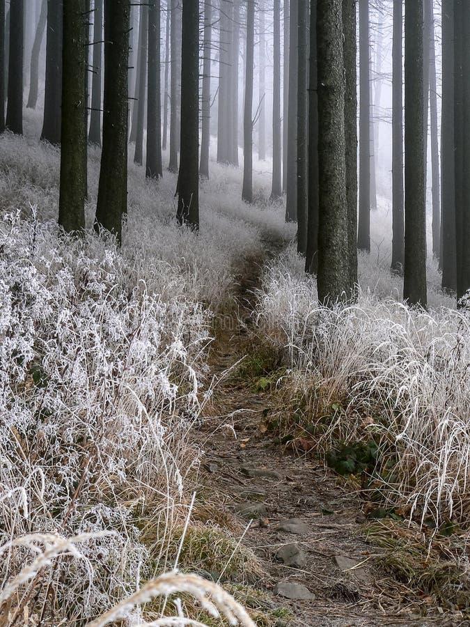 冬天有薄雾的森林 免版税库存图片
