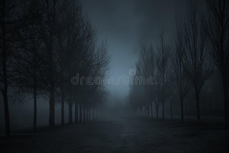 冬天有雾的公园 免版税库存照片