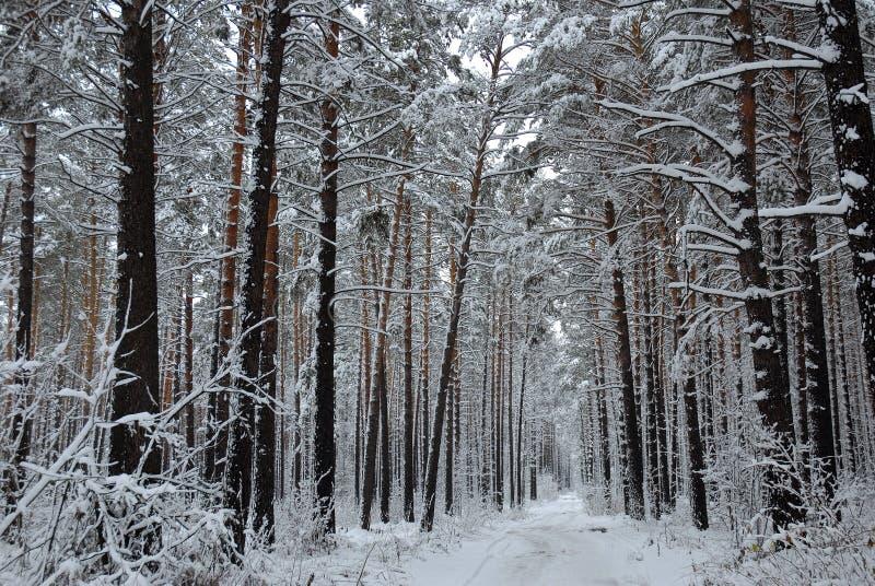 冬天木头 免版税库存图片