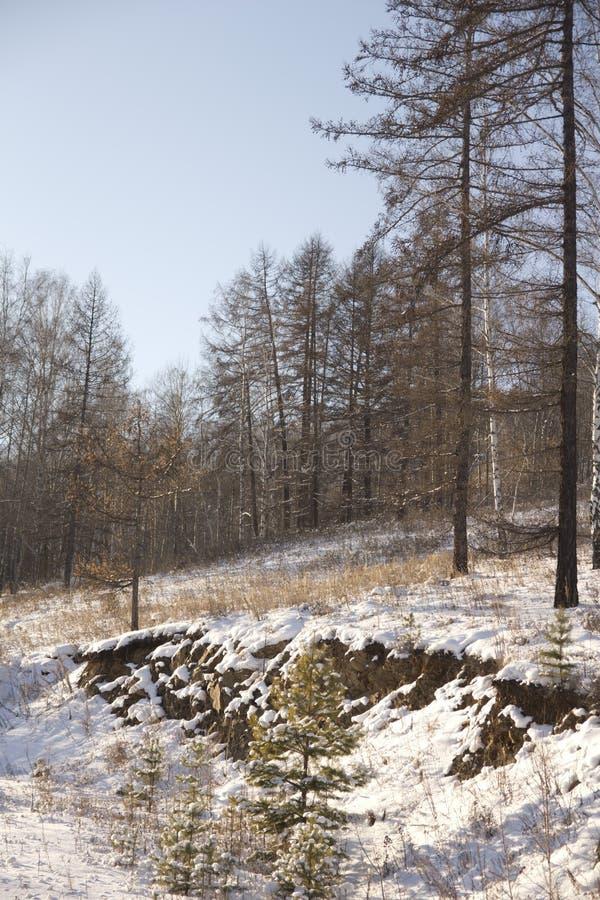 冬天木头 图库摄影