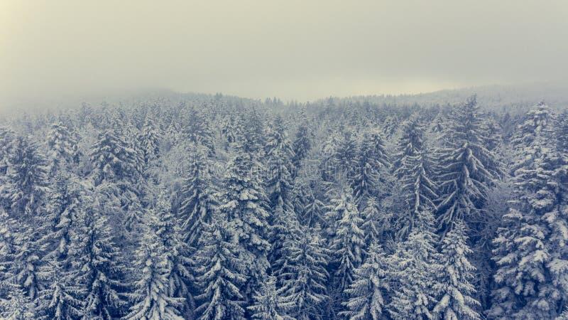 冬天杉木森林鸟瞰图  库存照片