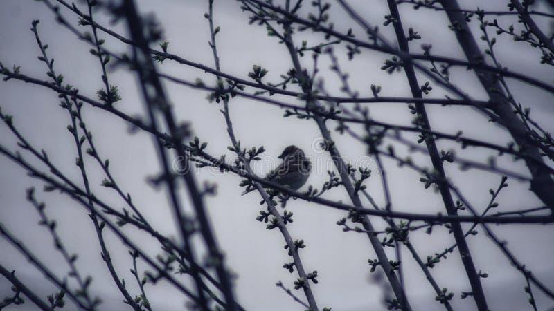 冬天树上麻雀的美丽摄影 库存图片