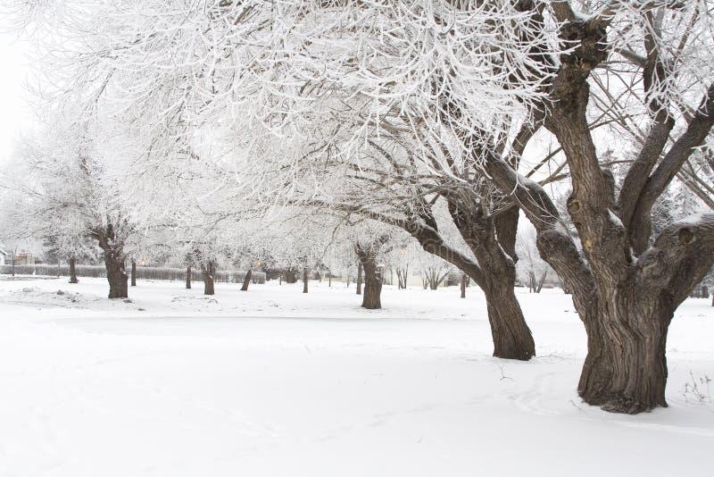 冬天树冰3 图库摄影