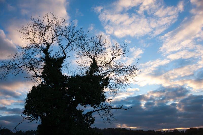 冬天树剪影 免版税库存照片