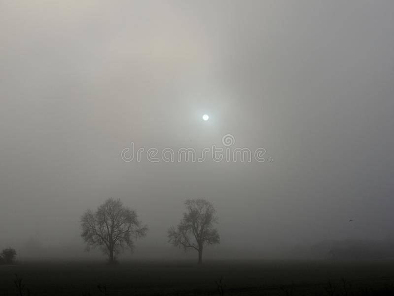 冬天树和雾与微弱的太阳 免版税库存图片