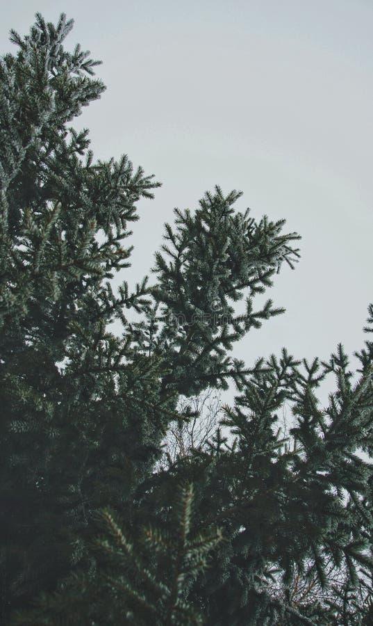 冬天树在俄罗斯 库存照片