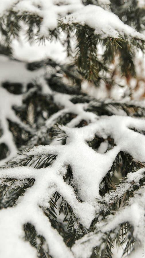 冬天树在俄罗斯 库存图片