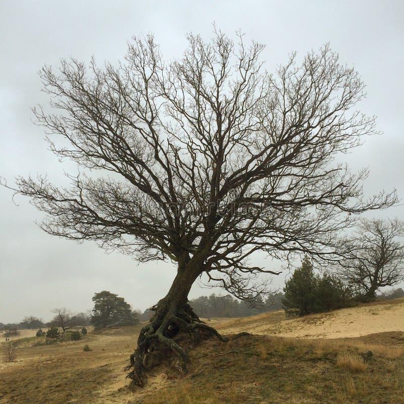 冬天树在埃尔默洛 免版税库存照片