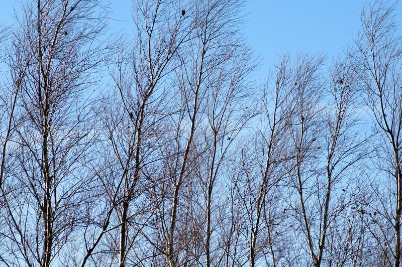 冬天树在阳光下 库存图片
