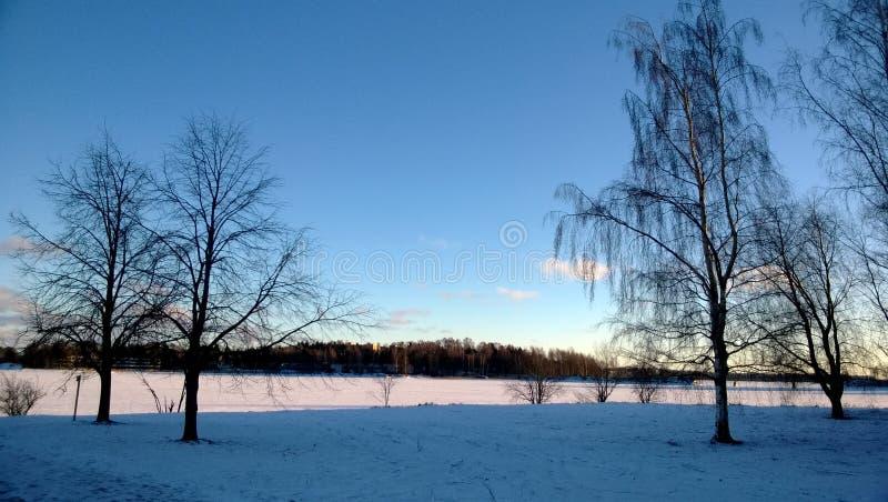 冬天树在Otaniemi埃斯波,芬兰2014年1月 库存照片