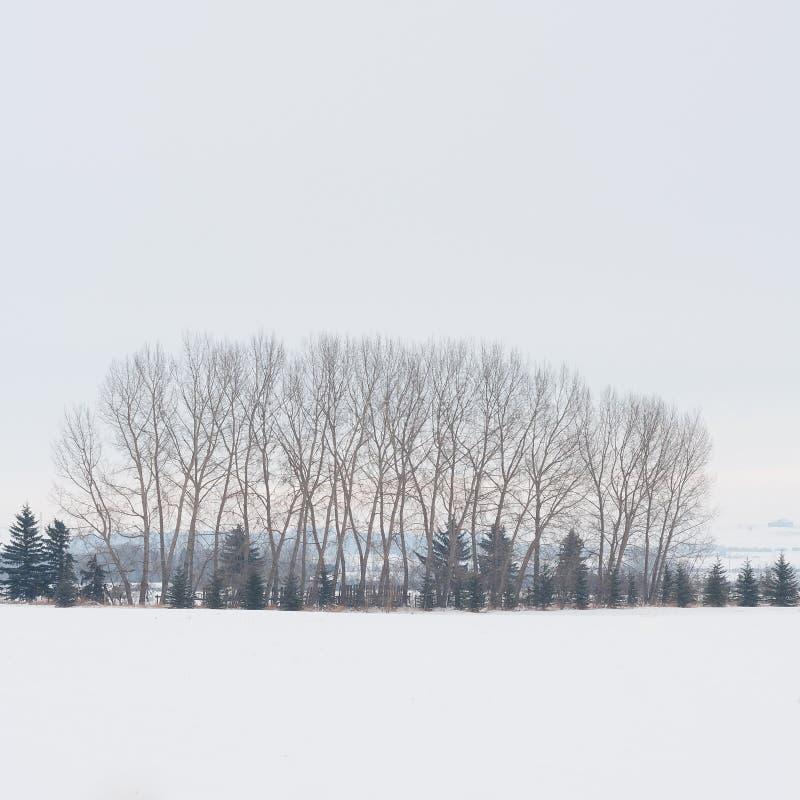 冬天树树丛 图库摄影