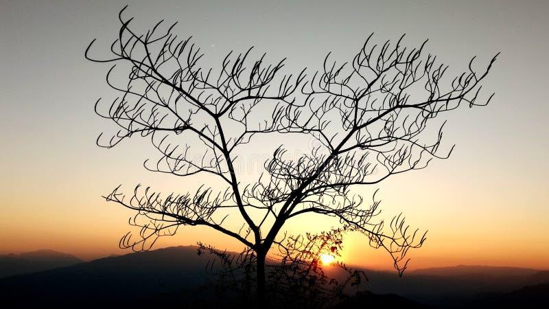 冬天树荫  库存照片