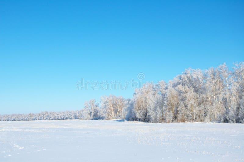 冬天森林与干净的蓝天的寒带草原风景 免版税库存图片