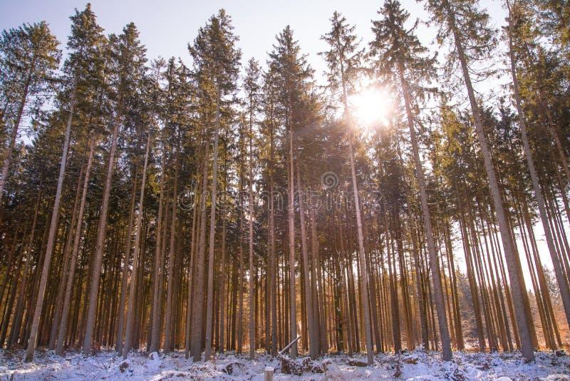 冬天森林光 库存照片