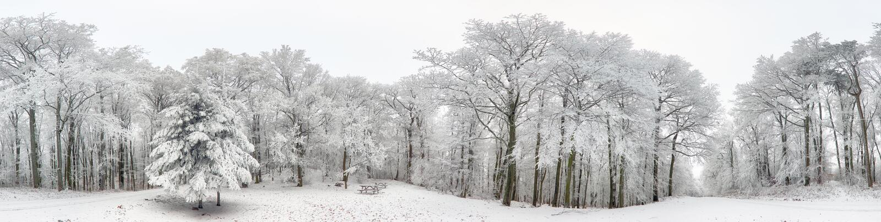 冬天森林全景有雪和树的 免版税库存照片