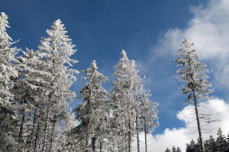 树在一个晴天的unter雪 库存图片