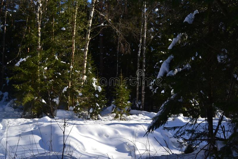 冬天森林在中央俄罗斯 免版税库存照片