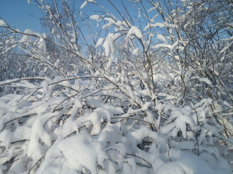 冬天森林在中央俄罗斯 库存照片