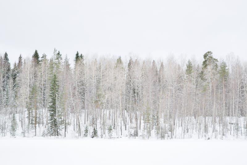 冬天森林在俄罗斯 免版税库存照片