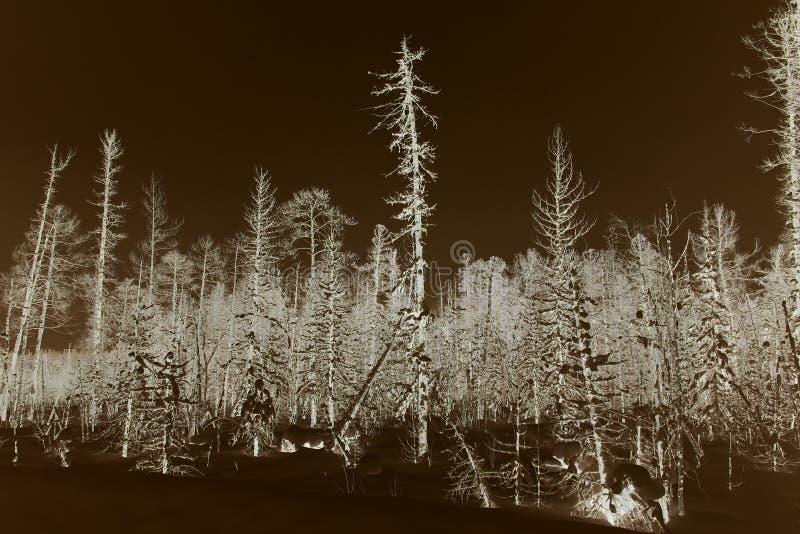 冬天森林在填装石油Aganskoye石油燃气油田以后 库存图片