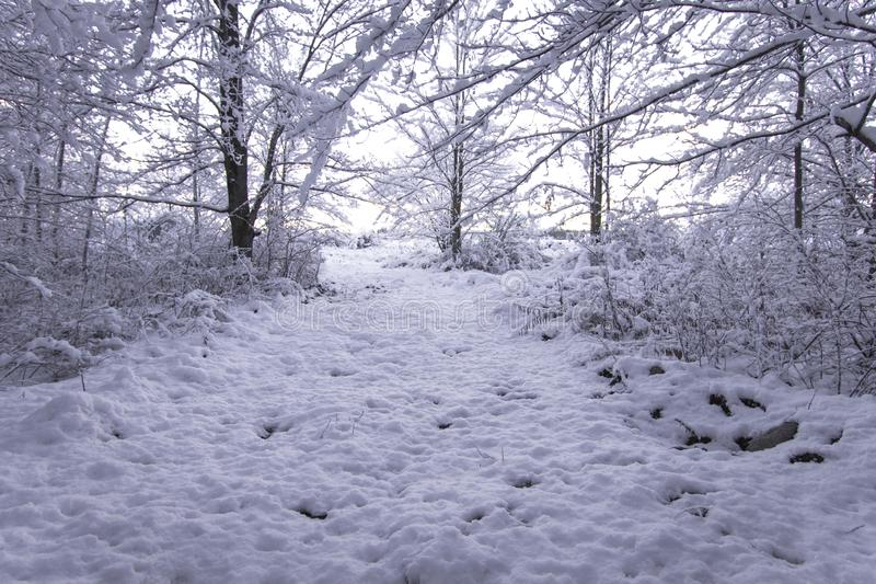 冬天森林在日出的风景足迹 库存照片