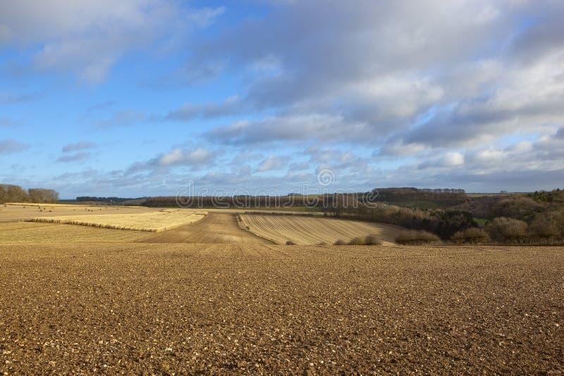 冬天森林地和犁土壤 库存图片