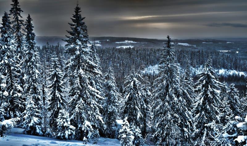 冬天森林的看法在北芬兰, hdr照片 库存照片