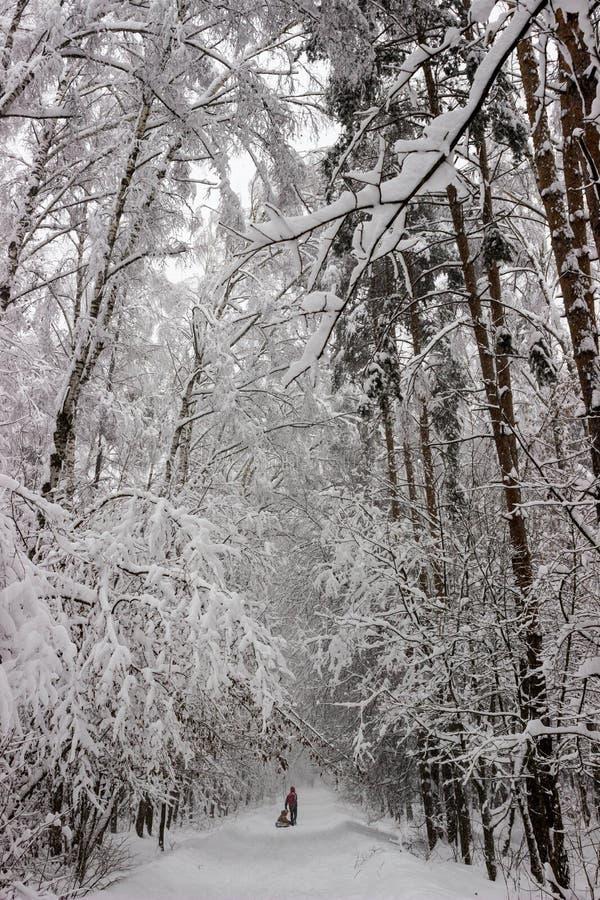 冬天森林胡同 免版税库存照片
