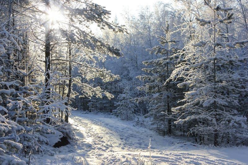 冬天森林,俄罗斯 免版税库存图片