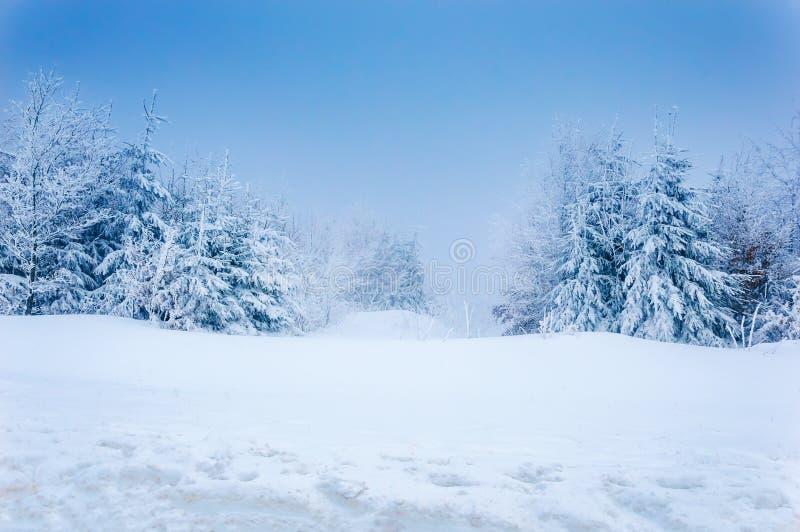 冬天森林:深雪和多雪的树在天空蔚蓝下 免版税库存照片