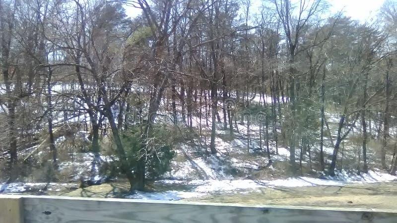 冬天森林 库存照片