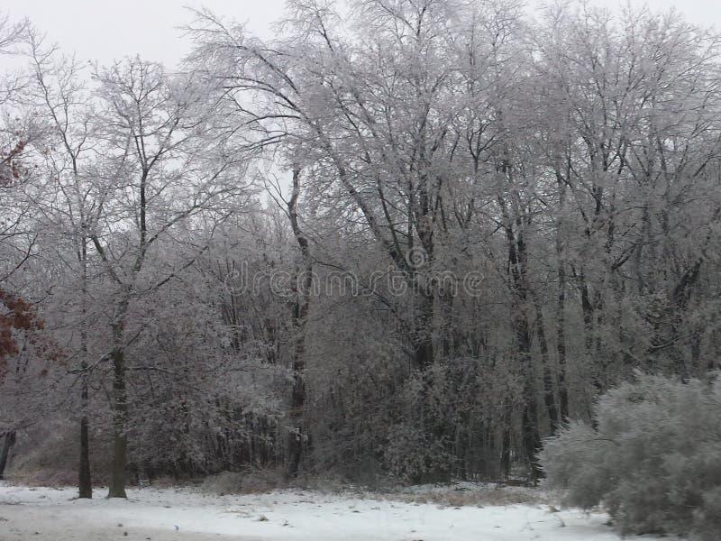 冬天森林1 库存图片