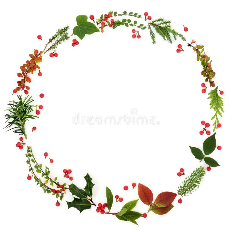 冬天植物群花圈诗歌选 库存照片
