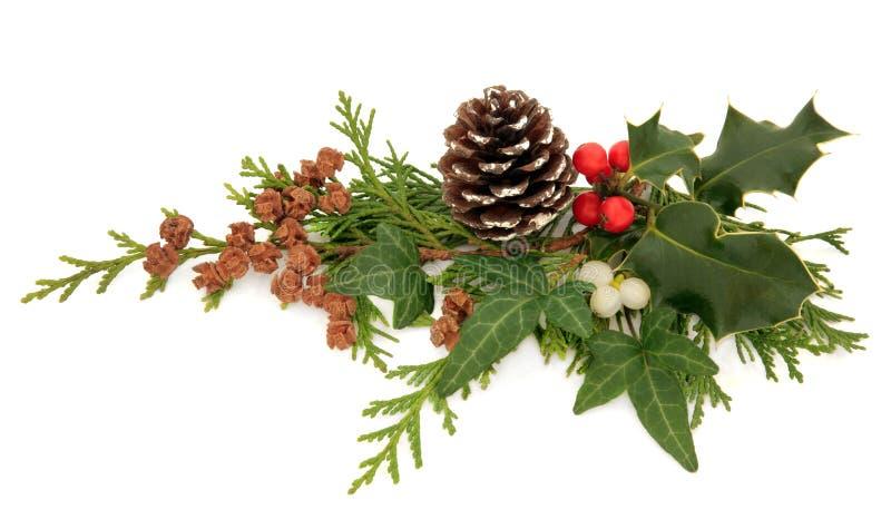 冬天植物群装饰 免版税库存图片