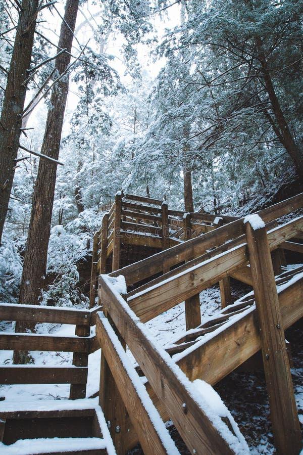 冬天楼梯在森林里 免版税库存图片