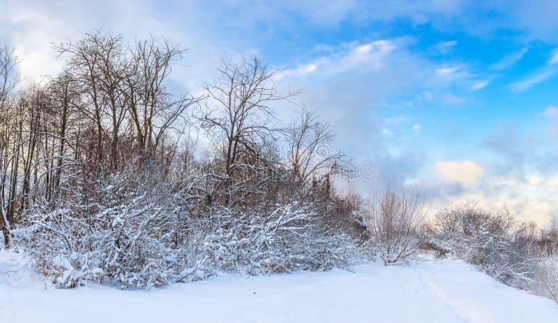 冬天横向全景 免版税库存图片