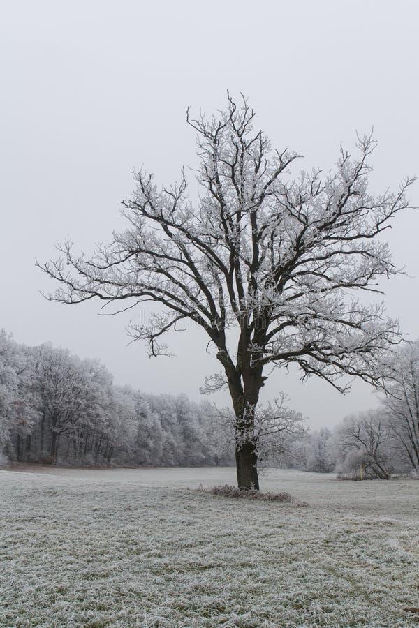 冬天横向在巴伐利亚 免版税库存图片