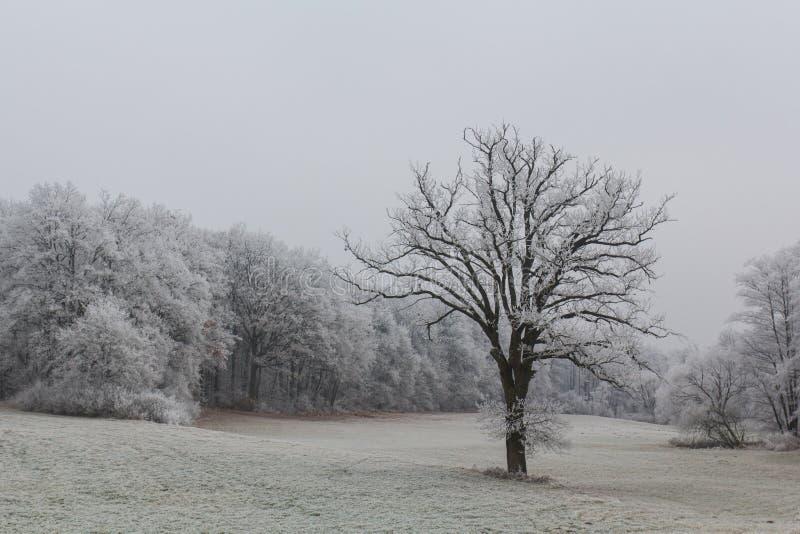 冬天横向在巴伐利亚 库存图片