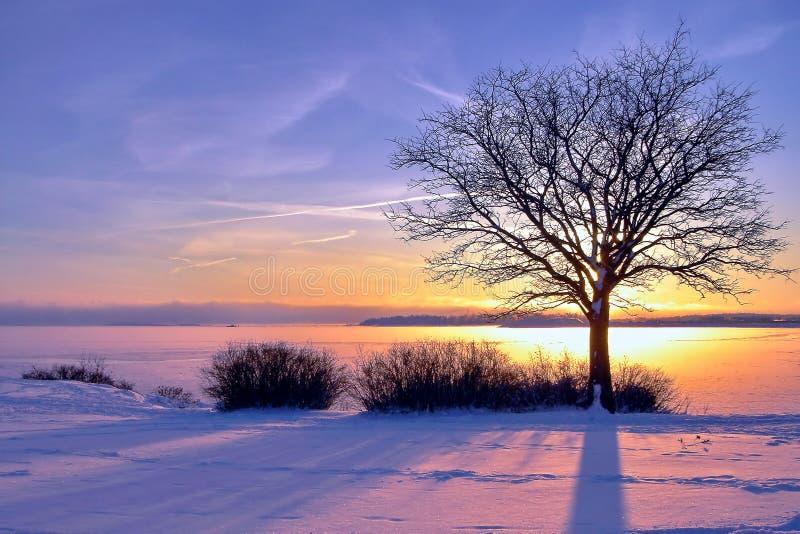 冬天海日落和一棵树在芬兰 免版税库存照片
