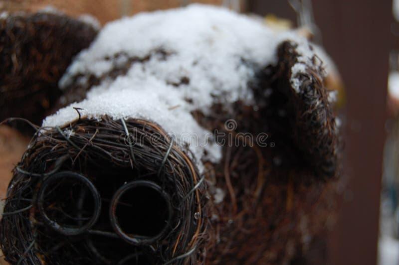 冬天猪 免版税图库摄影