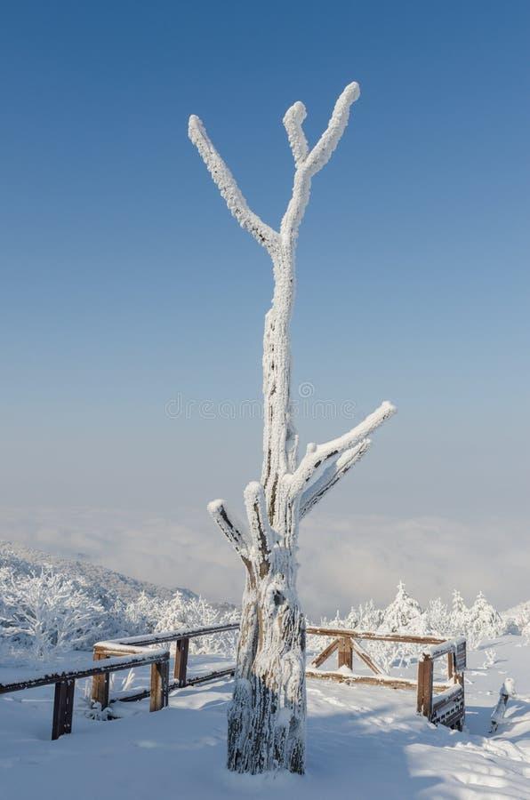 冬天白色雪早晨 与海雾的背景是最美好的风景, Sobaeksan山在韩国 库存照片